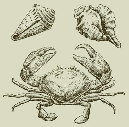 Immagine vettoriale di un granchio e le conchiglie Archivio Fotografico - 84346999
