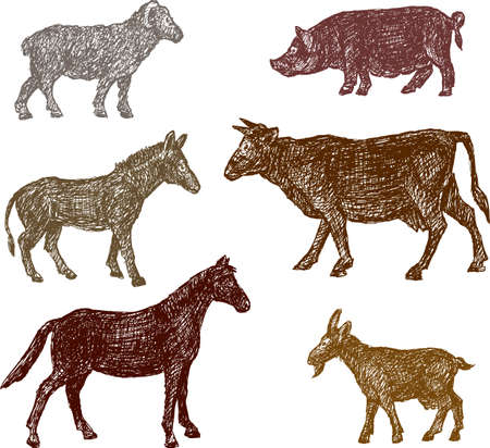 Hand drawings of the different farm animals