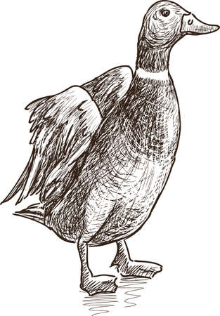 Sketch of a funny duck