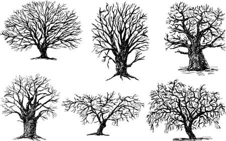 silhouettes of the different deciduous trees Illusztráció