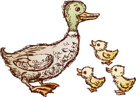 Vector image of a duck with her duckling