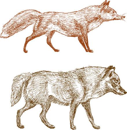Croquis d'un loup et un renard vector illustration. Banque d'images - 85107032