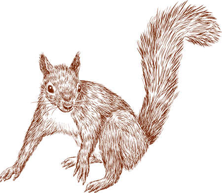 Sketch of a forest squirrel