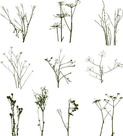 Silhouettes of the different wild flowers Illustration