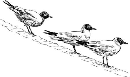Vector sketch of the sea gulls