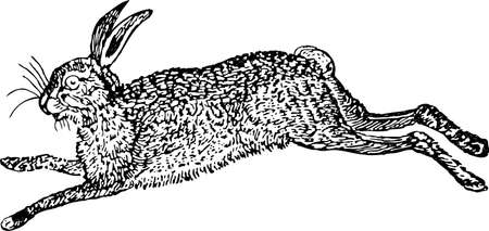 Drawing of a jumping wild hare Illustration