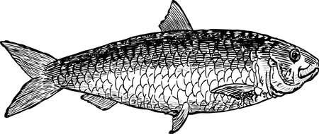 An image of a sea fish