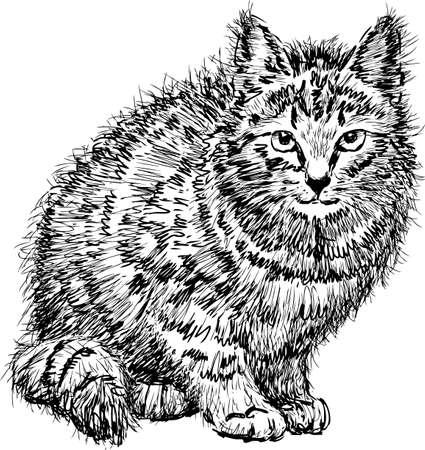 Sketch of a disheveled domestic cat Ilustração
