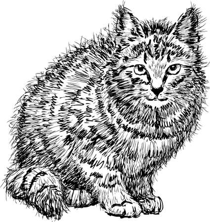 Sketch of a disheveled domestic cat Illustration