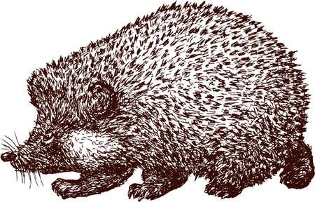 Vector drawing of a walking hedgehog. Illustration
