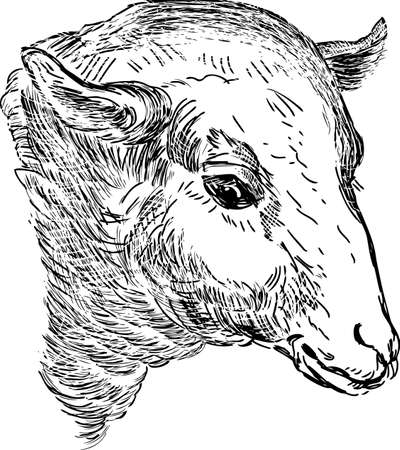 Vector sketch of the sheep head