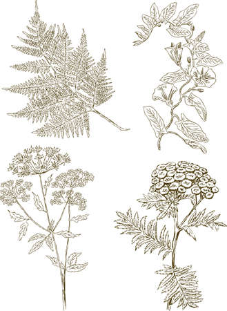 Drawings of the different wild flowers Ilustração