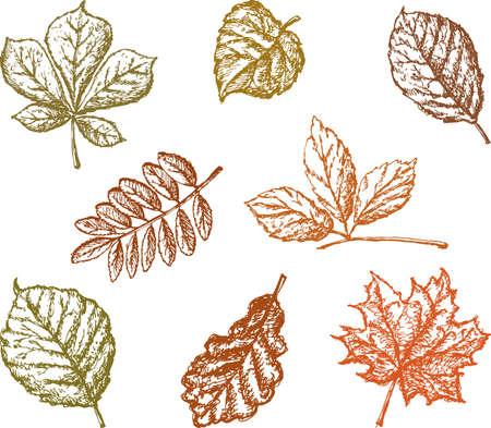 Conjunto de icono de hojas diferentes. Ilustración de vector