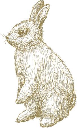 Croquis d'un bébé lapin Banque d'images - 85903787