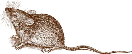 Vector drawing of a little mouse Çizim