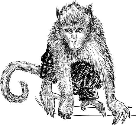 Drawing of a trained monkey Illustration