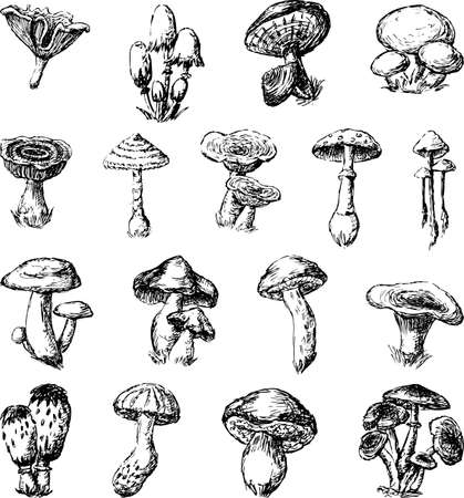 Vector sketches of the different mushrooms 向量圖像