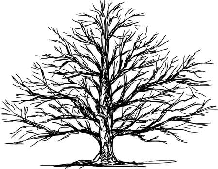 Sketch of a tree in the winter. Illusztráció