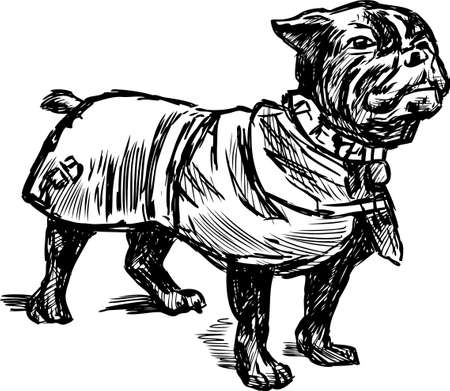 Vector drawing of a pug dog