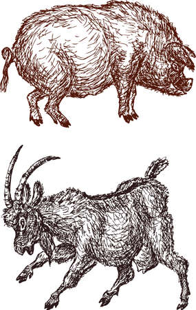 Sketches of the funny pig and goat