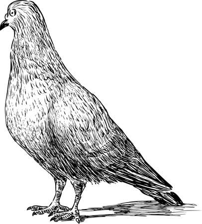 Sketch of a city pigeon