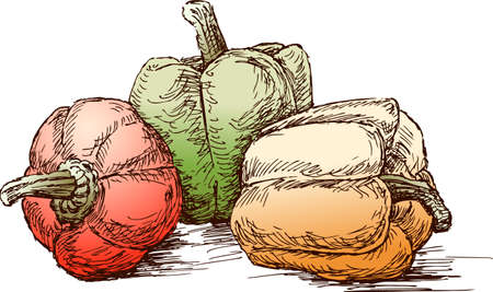 Sketch of the ripe sweet peppers