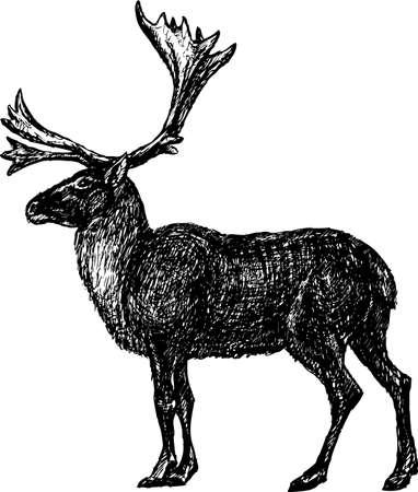 Vector drawing of a reindeer Çizim