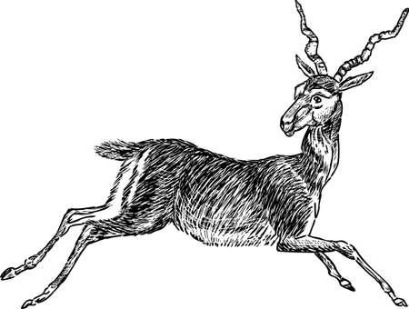 Vector drawing of a running roe deer