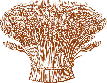 Drawing of bunches of wheat.