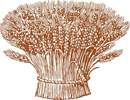 Tekening van trossen tarwe. Stock Illustratie