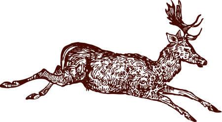 Vector drawing of a running deer