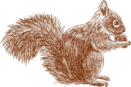 Een boseekhoorn eet een nat. Vector illustratie. Stock Illustratie