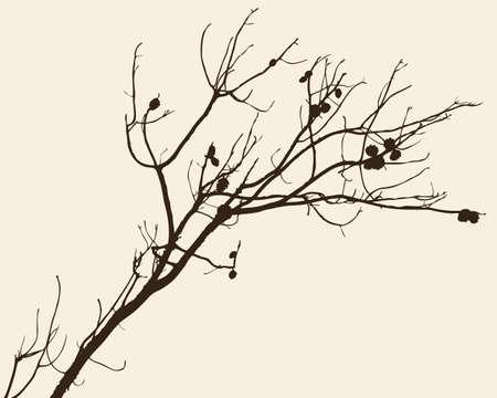 松の木の枝のシルエット