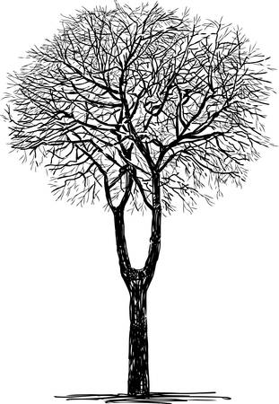 Silhouette of a deciduous tree without leaves Illusztráció