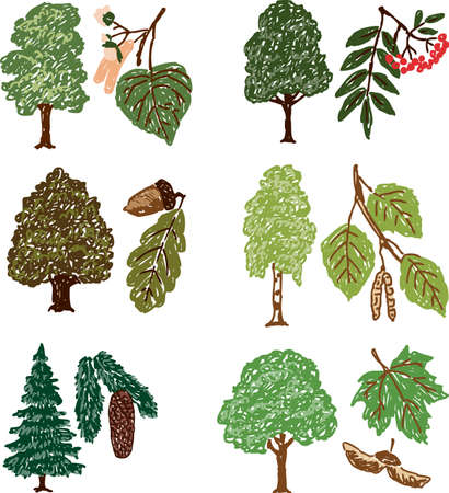 Vector drawings of the different deciduous trees Illustration