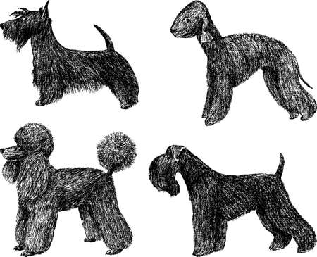 Hand drawings of the dogs of the different breeds