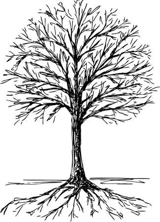 Silhouette of a deciduous tree with the roots.
