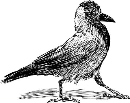 Vector drawing of a striding crow