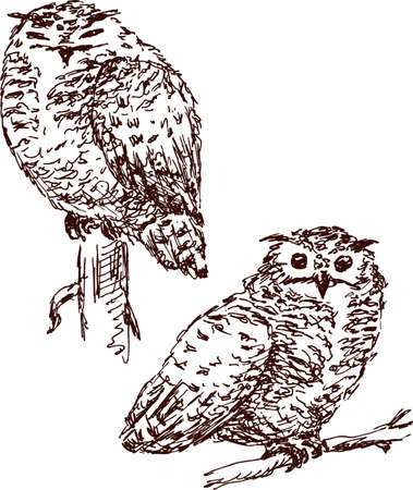 shaggy: The owls on the branches Illustration