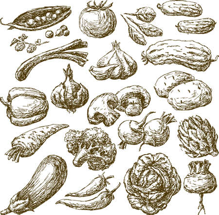 Sketches of the different ripe vegetables