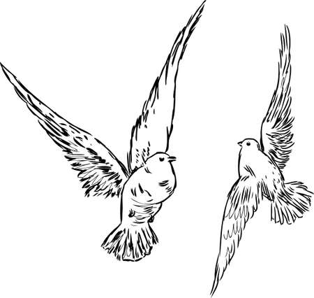 Sketch of the flying birds