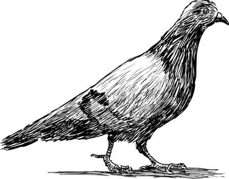 Hand drawing of a walking pigeon.