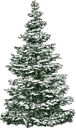 冬のシーズンのモミの木の描画