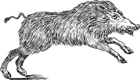 Sketch of a wild boar
