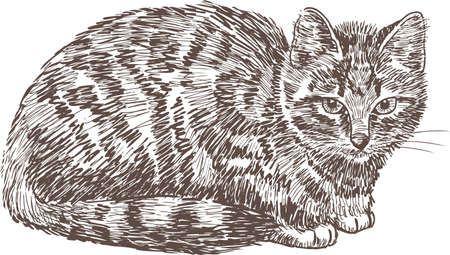 Sketch of a domestic cat Ilustração