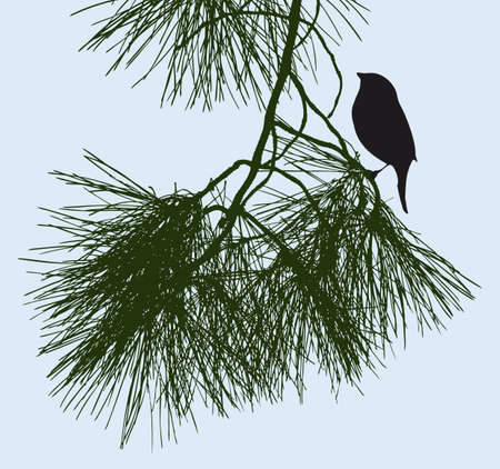 Bird is sitting on a pine twig Ilustração