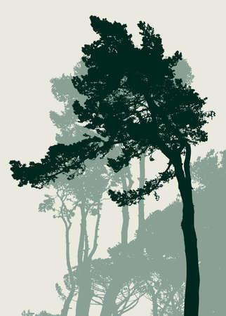 イタリアの松のシルエット