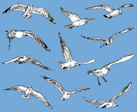 Seagulls in flight on plain background  イラスト・ベクター素材