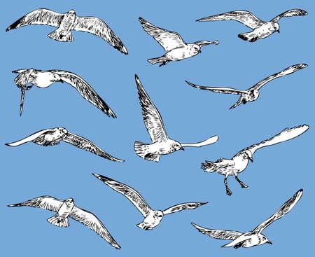 Seagulls in flight on plain background Ilustrace
