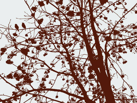 Silhouette of a rowan tree in the cold season